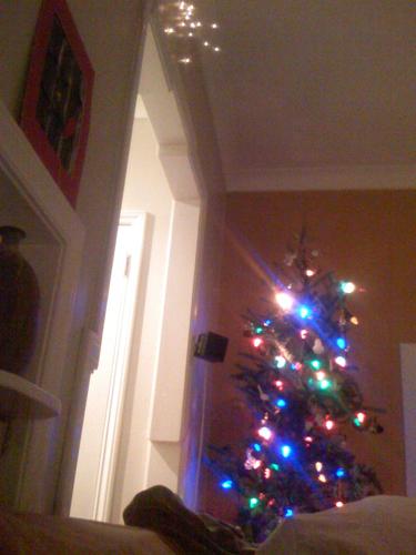 cheery tree